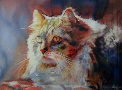 "1st Prize ""The Hospital Cat"""